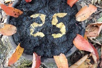 25 leaves cake