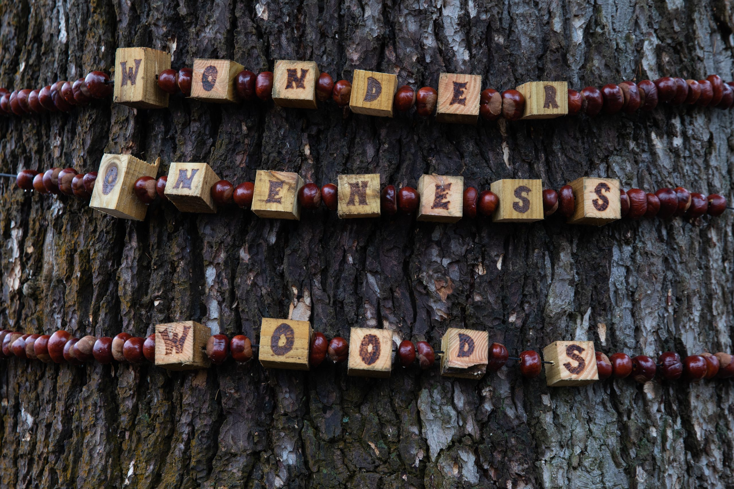 wonder oneness